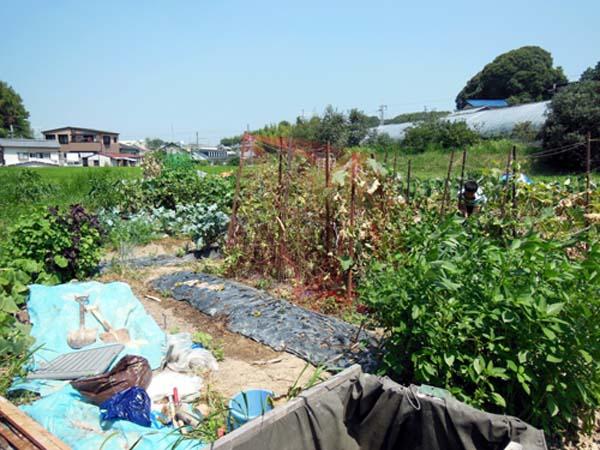 自然農、野菜たち