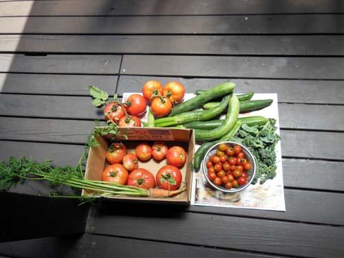 トマト、きゅうりなどの野菜